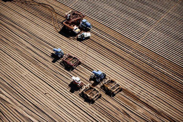 farm-machinery-harvesting-potatoes-idaho-resized-619x413